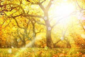 Magical blurry sunny autumn tree background