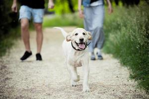 beautiful dog for a walk in the park runs photo