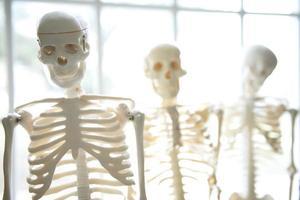 esqueleto humano biología educación