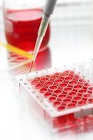 Closeup on sample biomedical research photo