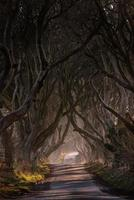 Winter Light at the Dark Hedges photo