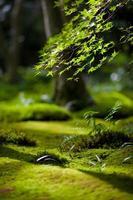 jardín cubierto de musgo