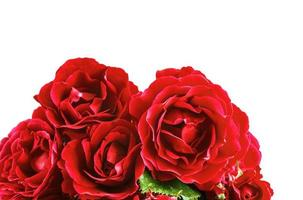 Flowers red roses on a white background photo