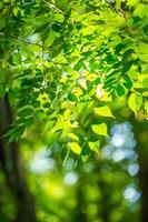 Fresh green trees photo