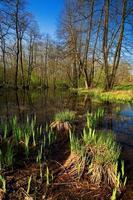 pantano con islas de plantas