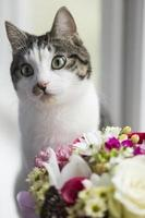 Cat with flowers photo