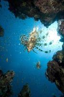 pez león caza cristal pez foto