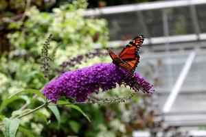 Butterfly and Greenhouse