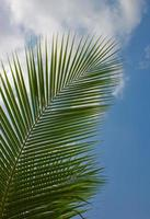 palm trees against the blue sky photo