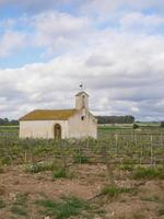 Penedes vineyards photo