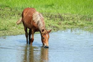 caballo agua potable