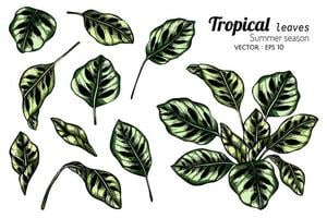 Set of Exotic Tropical Leaves