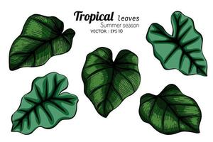 Set of Large Tropical Leaves