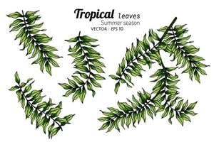 Set of Fern Leaf Drawings