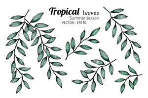 Set of Tropical Botanical Leaves