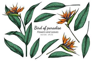 Set of Bird of Paradise Flower Drawing