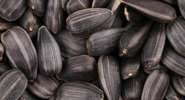 Fondo de semillas de girasol negras.