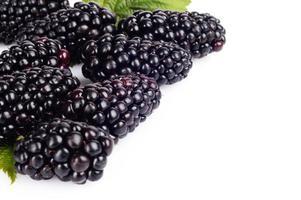 Macro photo of fresh blackberries right side white