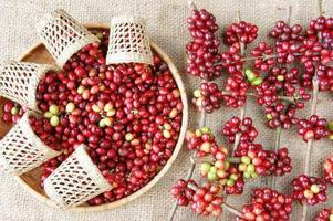 grano de café fresco rojo