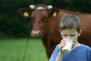 la leche de consumo foto