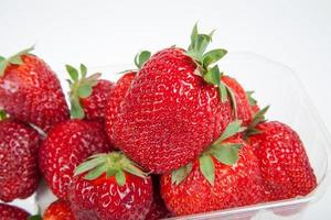 fresh strawberries in the plastic tray