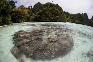 corales laguna