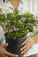 Man Holding Potted Plant photo