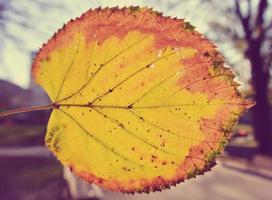 Yellow, golden back-lit leaf; closeup; retro