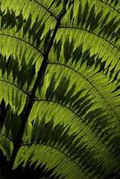 Fern leave against the light photo