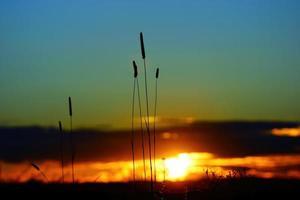 temor crepúsculo multicolor, espectacular puesta de sol retroiluminada hierba