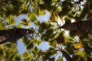 palmeras vistas desde abajo
