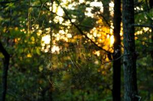 Spiderweb backlit by the setting sun