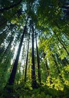 bosque con grandes arboles.