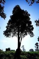 The tree. photo