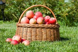 basket with red apples costs photo