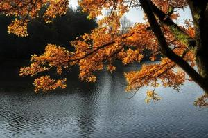 Stunning backlit Autumn golden tree with lake in background photo