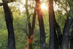 pôr do sol na floresta
