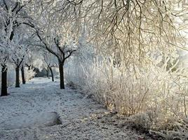 Footpath in a frozen frost covered park