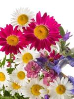 cheerful bouquet photo