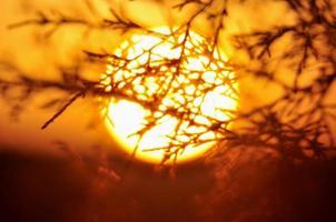 Puesta de sol gigante detrás de ramas