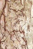 textura del árbol
