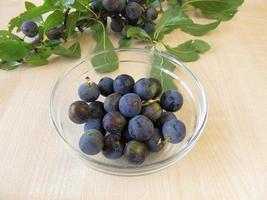 Blackthorn twig an a bowl of sloe fruits photo
