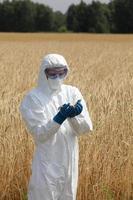 biotechnology engineer on field examining ripe ears of grain photo