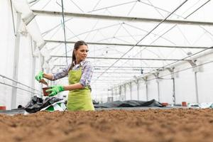 Seeding plants in greenhouse