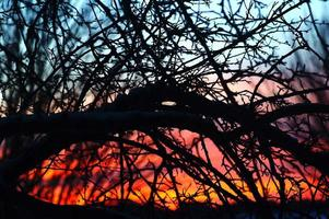 Twilight through branches : Colorful sunset back lit tree photo
