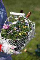 jardinería foto