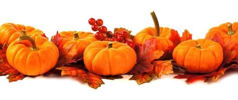 Autumn border photo