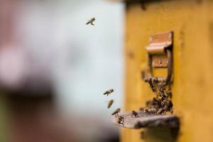 honingbijen die rond hun bijenkorf vliegen