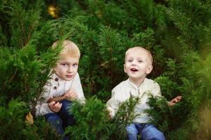 cheerful brothers boys children green bushes, tree arborvitae