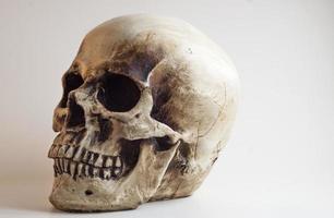 human skull replica left facing